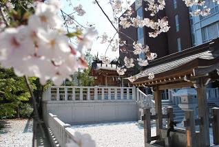 浪速高校桜